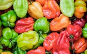 Agriculture dans la Vallée de l'Ouémé : Le marché à piment de Malomè mis en service