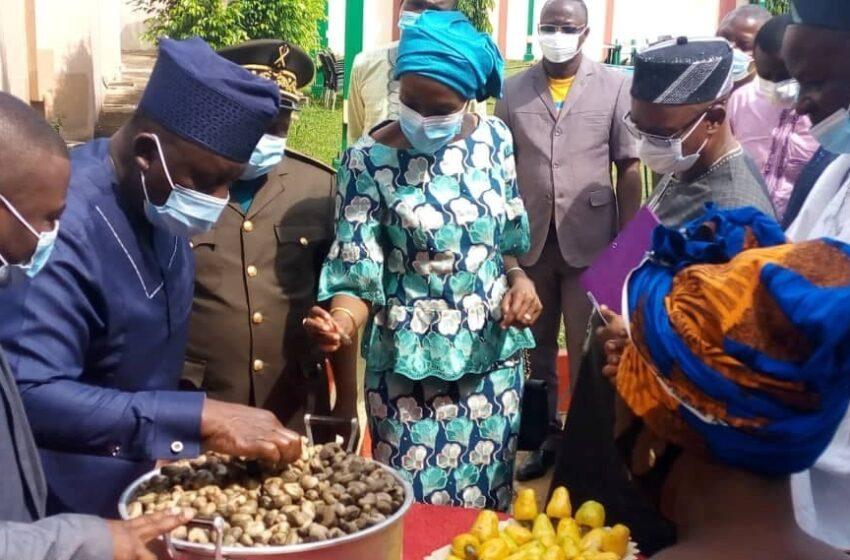 Commercialisation des noix de cajou au Bénin : Le top de la campagne 2020-2021 donné
