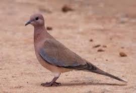 Sabi Naré: L'homme qui parle avec les oiseaux