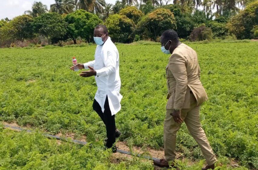 Campagne agricole 2021-2022: L'appel du Ministre Gaston Dossouhoui