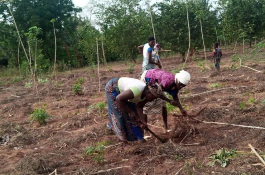 Lalo : Les femmes au cœur de l'agriculture